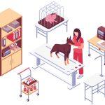 Veterinary IT Support